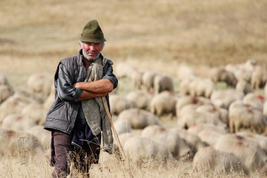 KKHR schapenherder